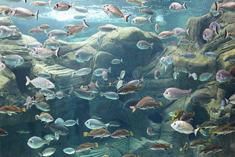 Mundo subacuático imágenes de archivo libres de regalías