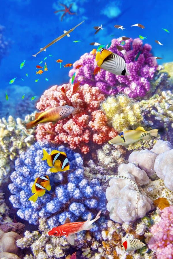 Mundo subacuático con los corales y los pescados tropicales imagen de archivo