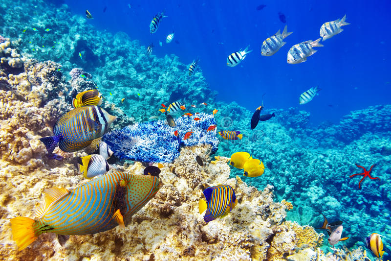 Mundo subacuático con los corales y los pescados tropicales imagen de archivo libre de regalías