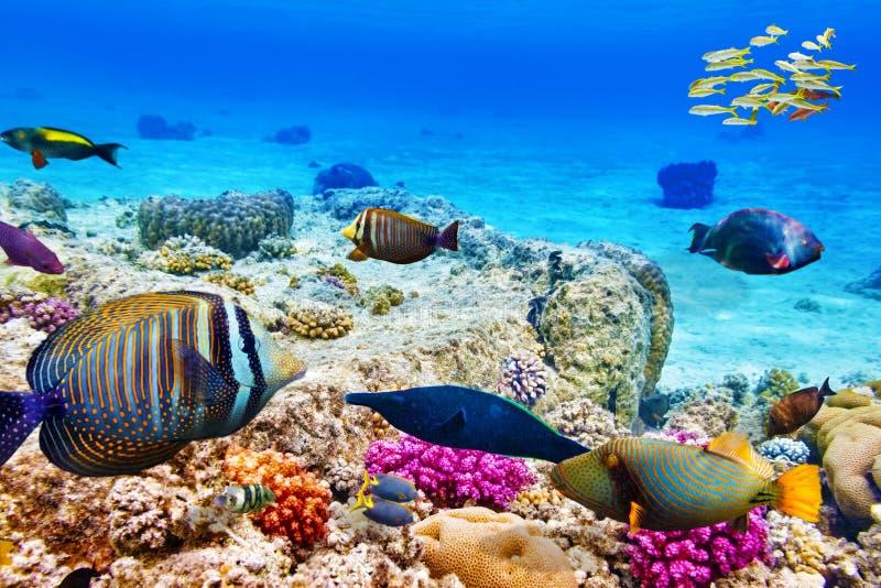 Mundo subacuático con los corales y los pescados tropicales fotografía de archivo