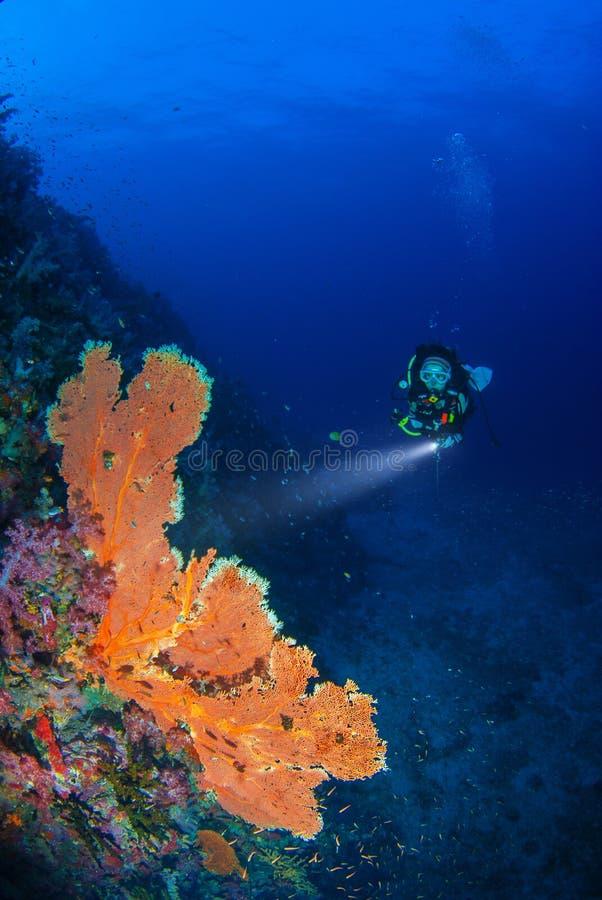 Mundo subacuático maravilloso con buceo con escafandra de la mujer joven foto de archivo