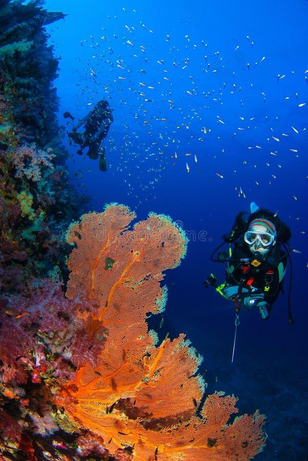 Mundo subacuático maravilloso con buceo con escafandra de la mujer joven fotos de archivo