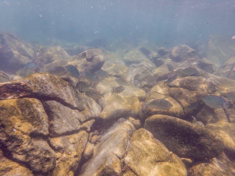 Mundo subacuático maravilloso y hermoso con los corales y los pescados tropicales fotos de archivo
