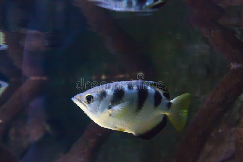 Mundo subacuático maravilloso y hermoso con los corales y los pescados tropicales foto de archivo