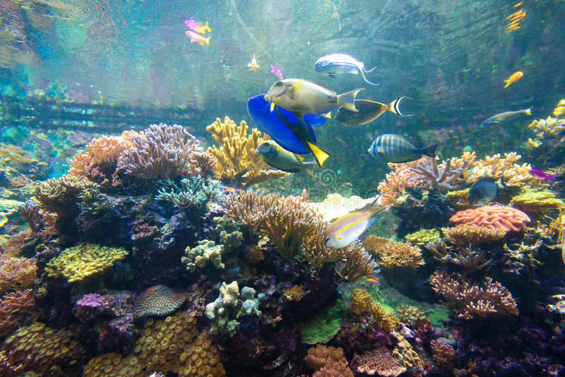 Mundo subacuático maravilloso y hermoso con los corales y tropica foto de archivo