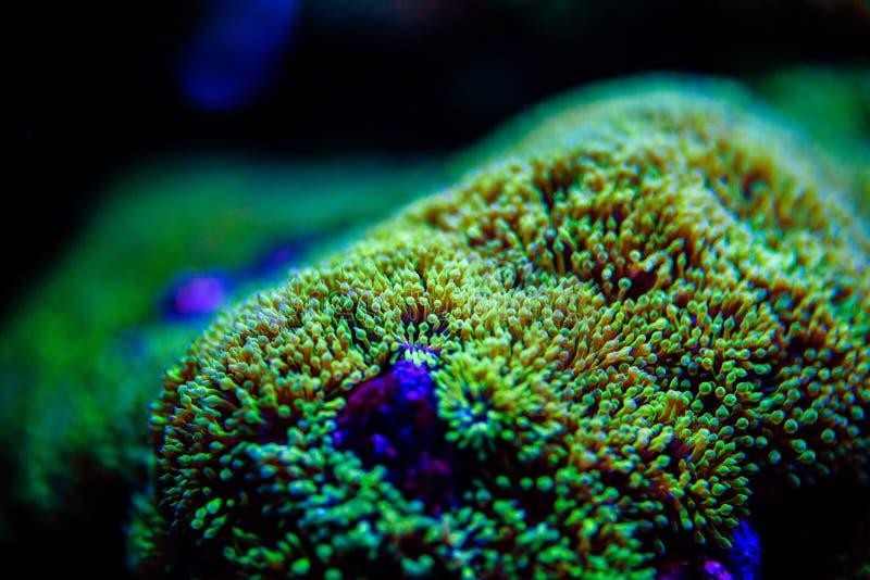 Mundo subacu?tico maravilloso y hermoso con los corales y los pescados tropicales imagenes de archivo