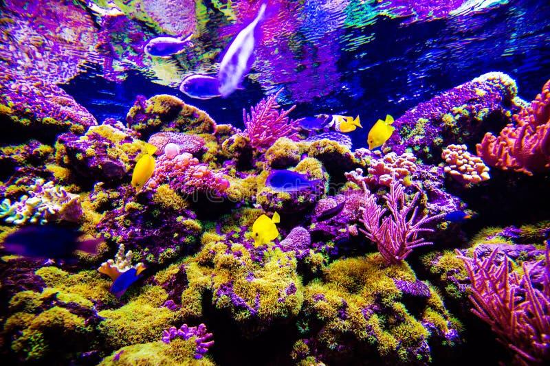 Mundo subacu?tico maravilloso y hermoso con los corales y los pescados tropicales imágenes de archivo libres de regalías
