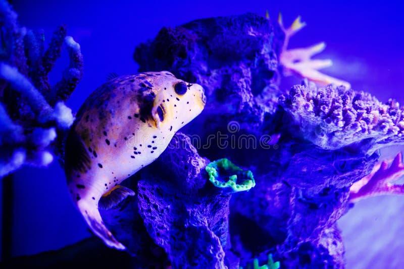 Mundo subacu?tico maravilloso y hermoso con los corales y los pescados tropicales fotos de archivo