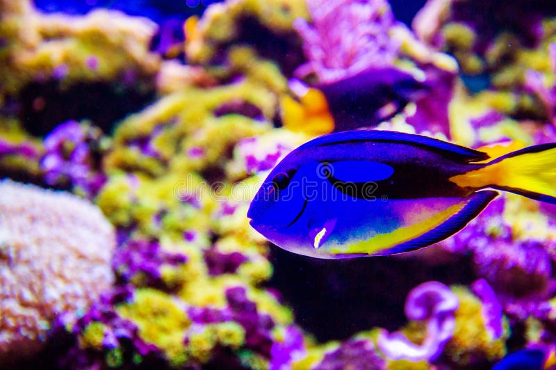 Mundo subacu?tico maravilloso y hermoso con los corales y los pescados tropicales foto de archivo