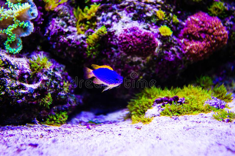 Mundo subacu?tico maravilloso y hermoso con los corales y los pescados tropicales fotografía de archivo libre de regalías