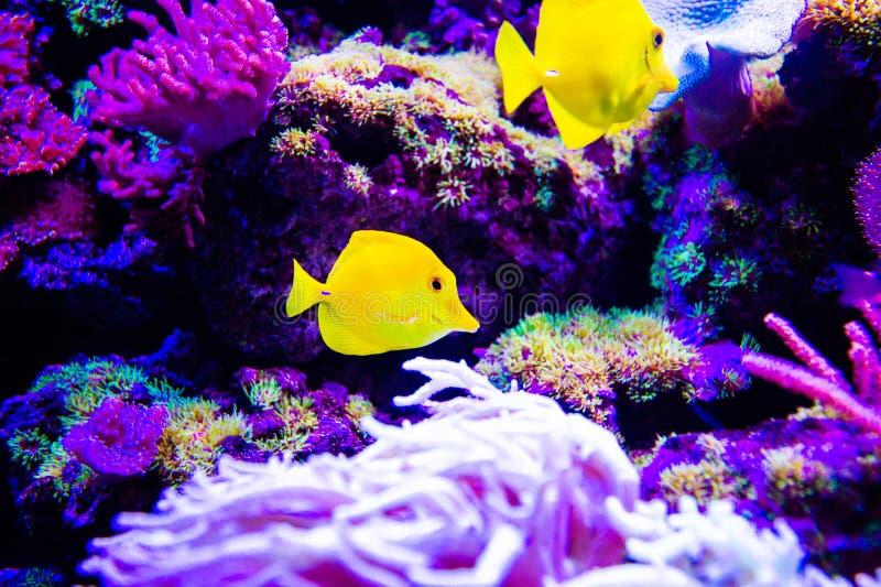 Mundo subacu?tico maravilloso y hermoso con los corales y los pescados tropicales fotos de archivo libres de regalías