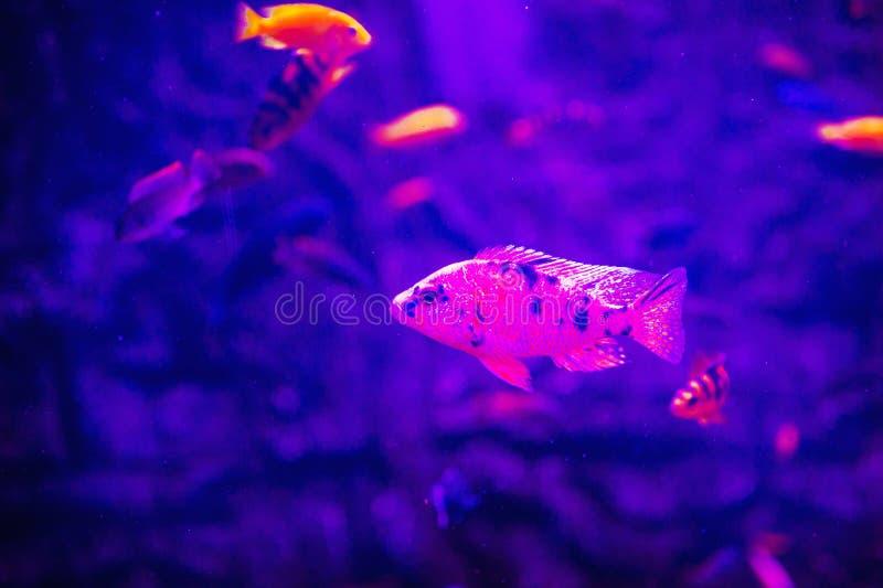 Mundo subacu?tico maravilloso y hermoso con los corales y los pescados tropicales fotografía de archivo