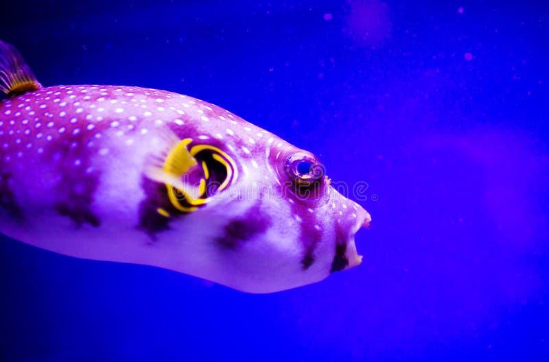 Mundo subacu?tico maravilloso y hermoso con los corales y los pescados tropicales foto de archivo libre de regalías