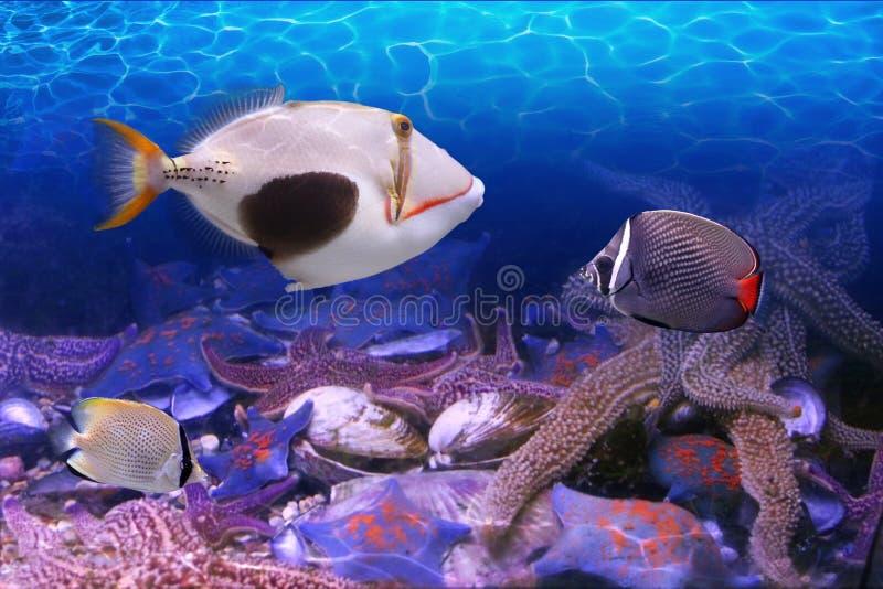 Mundo subaquático imagens de stock royalty free