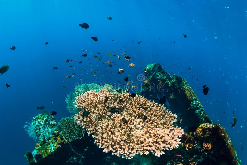Mundo subaquático bonito com corais e peixes tropicais no naufrágio fotografia de stock royalty free