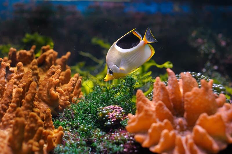 Mundo subaquático colorido imagens de stock