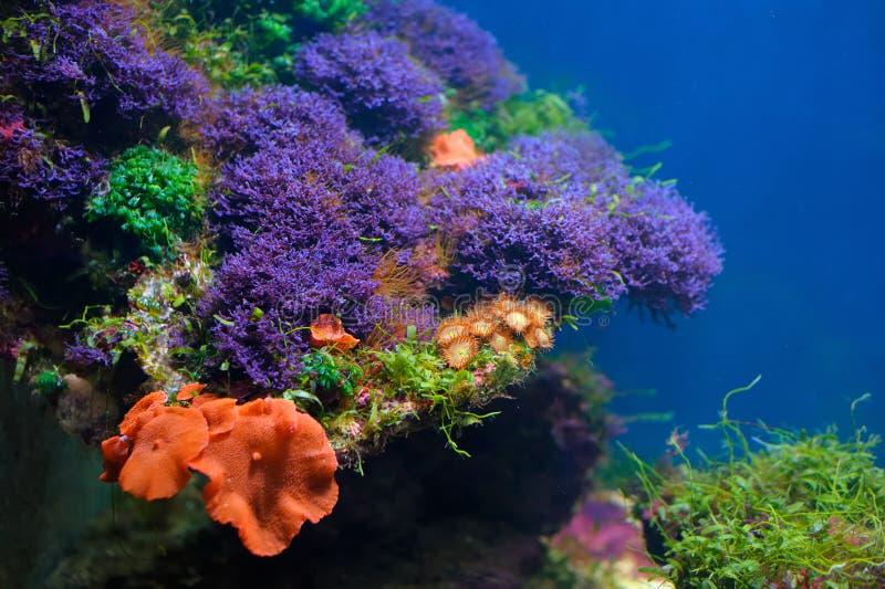 Mundo subaquático colorido fotografia de stock