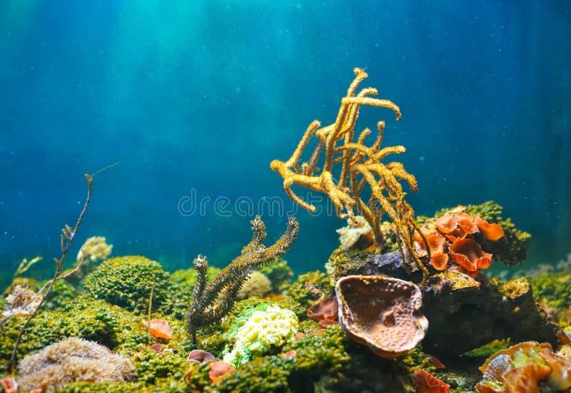 Mundo subaquático colorido fotos de stock royalty free
