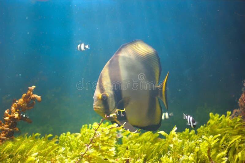 Mundo subaquático colorido fotografia de stock royalty free