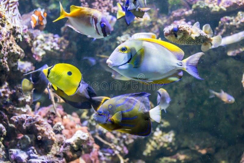 Mundo subaquático com corais e os peixes tropicais fotos de stock royalty free