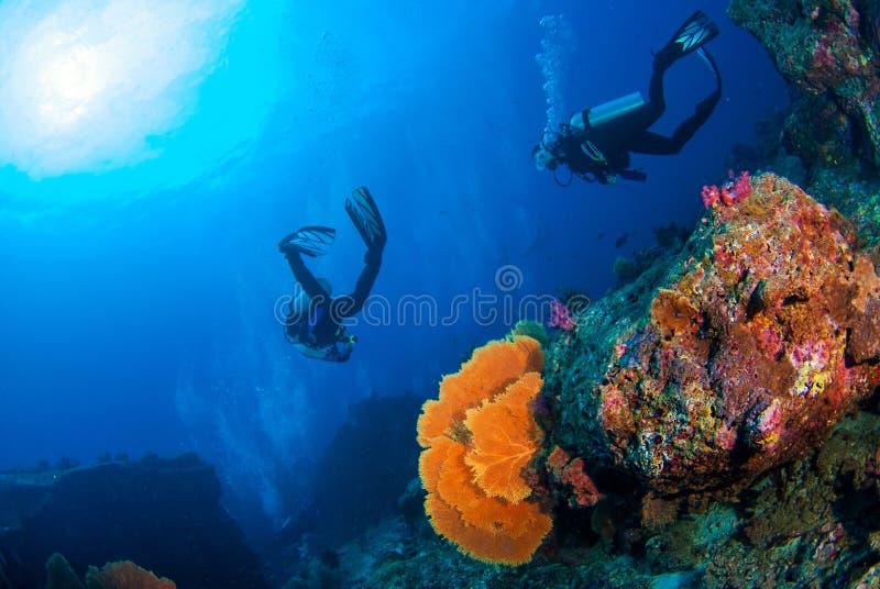 Mundo subaquático maravilhoso com os mergulhadores de mergulhador no recife de corais e no a imagens de stock