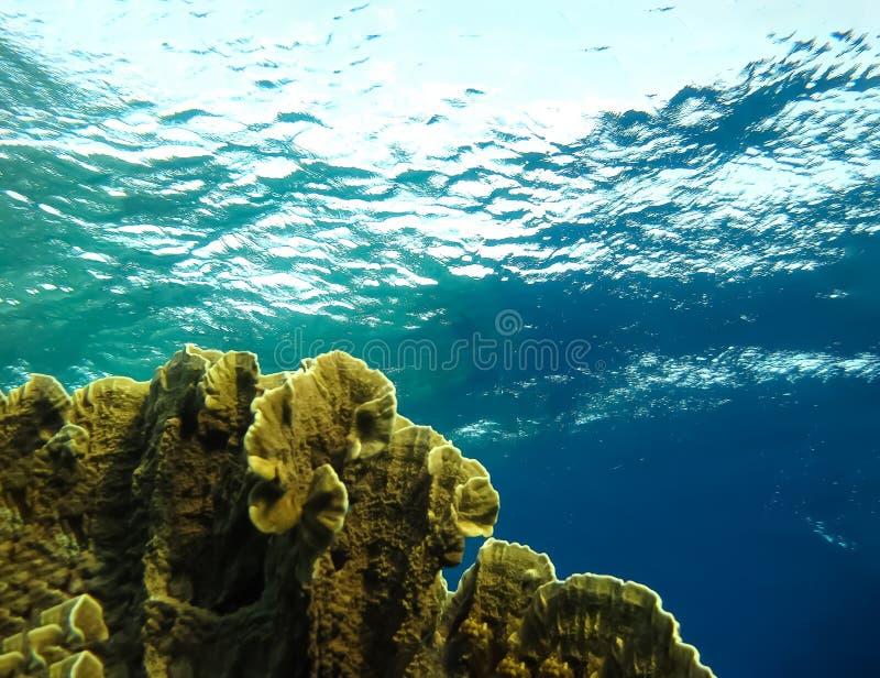 Mundo subaquático nas águas profundas na flora das flores do recife de corais e das plantas em animais selvagens do mundo azul, e fotos de stock
