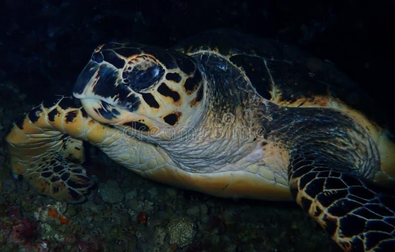 Mundo subaquático nas águas profundas na flora das flores do recife de corais e das plantas em animais selvagens do mundo azul, e imagem de stock royalty free