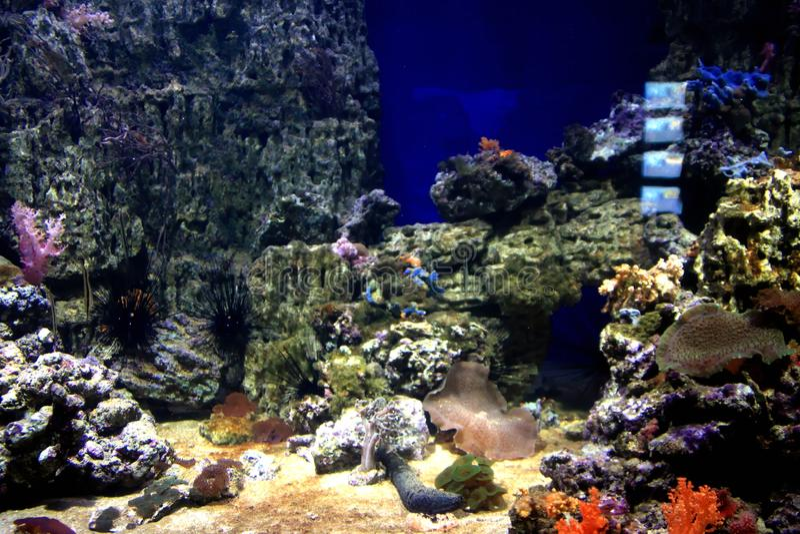 Mundo subaquático Oceanarium em Moscou Moskvarium fotografia de stock