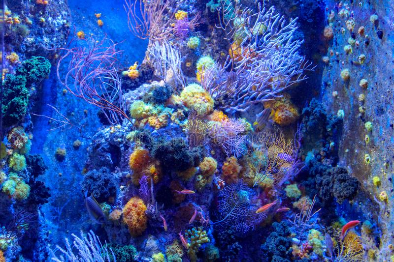 Mundo subaqu?tico maravilhoso com corais e peixes em singapore foto de stock royalty free