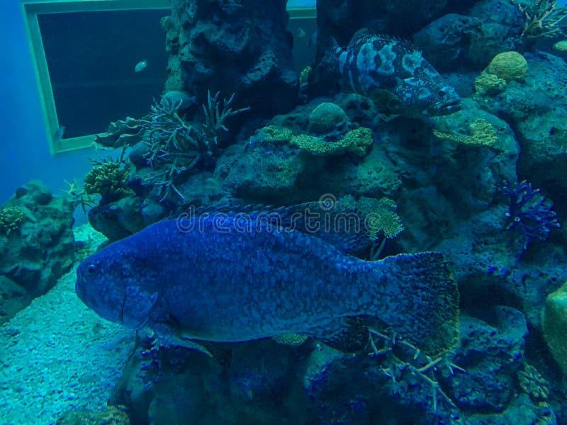 Mundo subaqu?tico maravilhoso e bonito com corais e os peixes tropicais fotos de stock royalty free