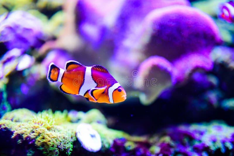 Mundo subaqu?tico maravilhoso e bonito com corais e os peixes tropicais imagens de stock royalty free
