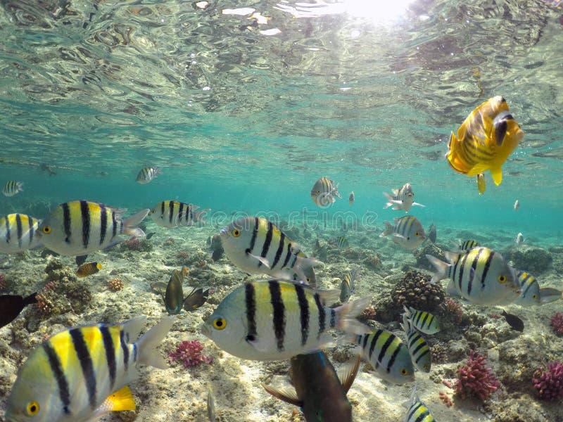 Mundo subaqu?tico maravilhoso e bonito com corais e os peixes tropicais imagens de stock