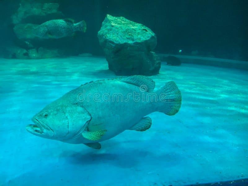 Mundo subaqu?tico maravilhoso e bonito com corais e os peixes tropicais fotografia de stock royalty free