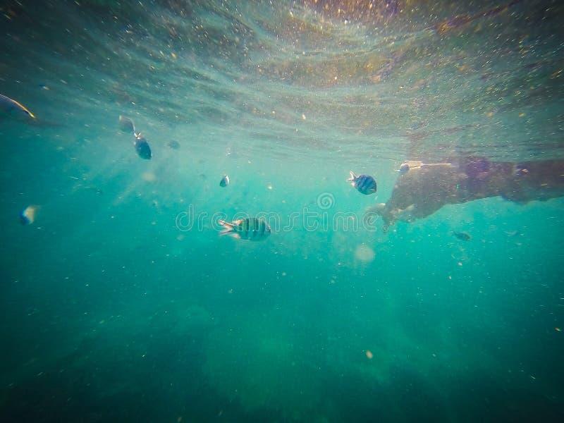 Mundo subaqu?tico Mergulhando com peixes, recife, rocha e coral do palha?o fotografia de stock