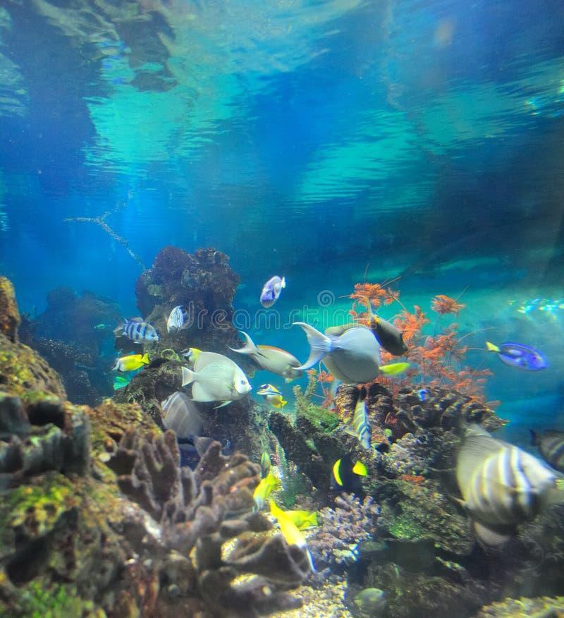 Mundo submarino fotografía de archivo libre de regalías