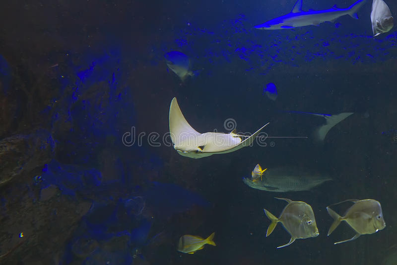 Mundo submarino foto de stock royalty free