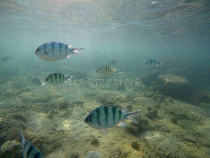 Mundo submarino com peixes e corais foto de stock