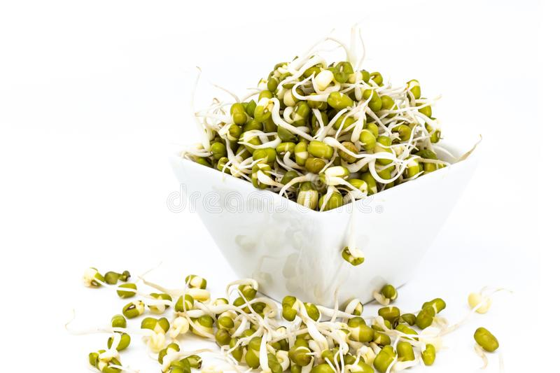 Mung bean sprouts in white porcelain sauce dish. Isolated on white stock image