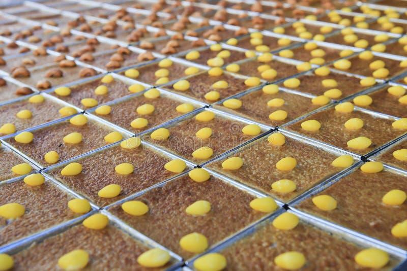 Mung Bean Thai Custard Dessert Recipe (Khanom-Schlund Kaeng) lizenzfreies stockbild