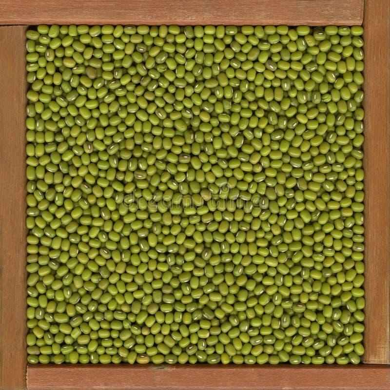 Mung beans background stock photo