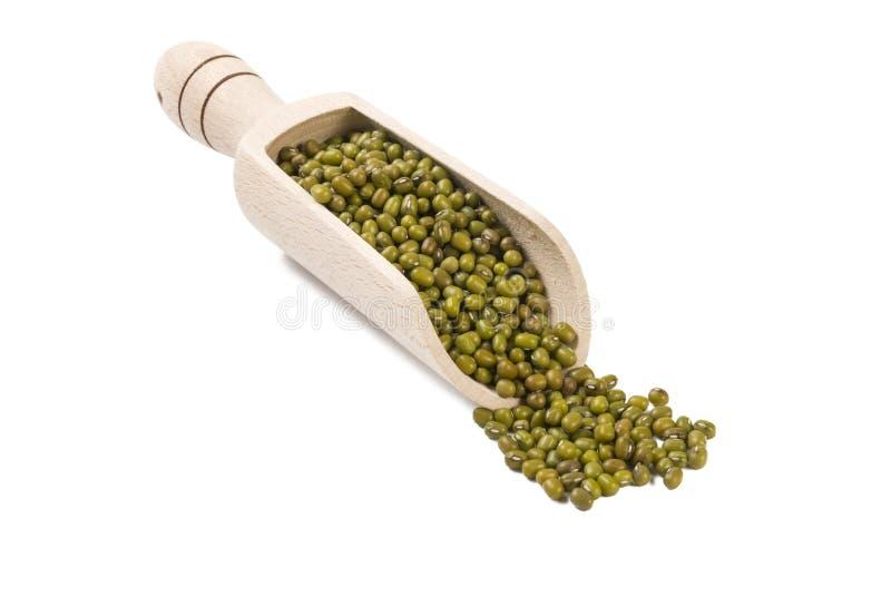 Mung ou mungo dans le scoop en bois d'isolement sur le fond blanc nutrition bio Ingrédient de nourriture naturel images libres de droits