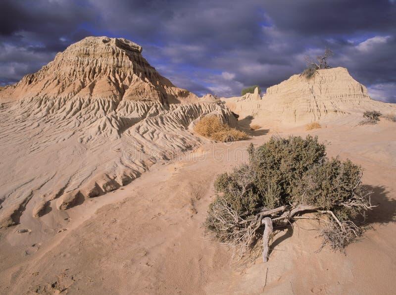 Mungo National Park Australien royaltyfri bild