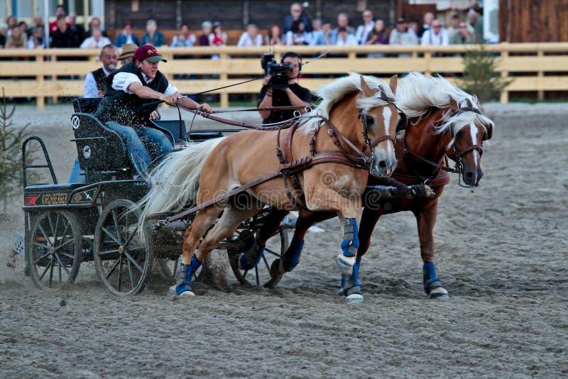 Munich, Alemanha - 26 de setembro de 2018: corrida de cavalos em Oktoberfest em Munich imagens de stock