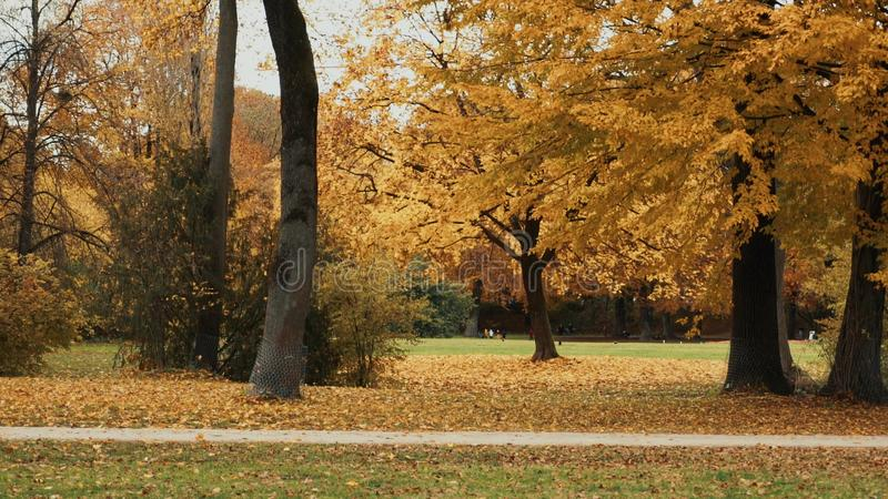 MUNICH, GERMANY, November 19, 2019: Autumn Cycling walk in the English garden in Munich. Locked down real time shot royalty free stock photography