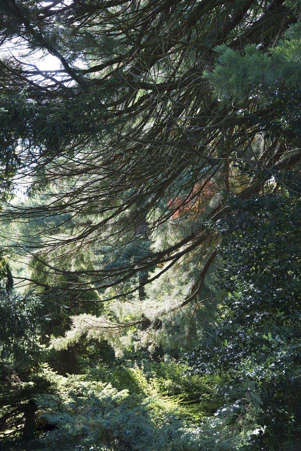 Municipal park Lahr/Black Forest royalty free stock images