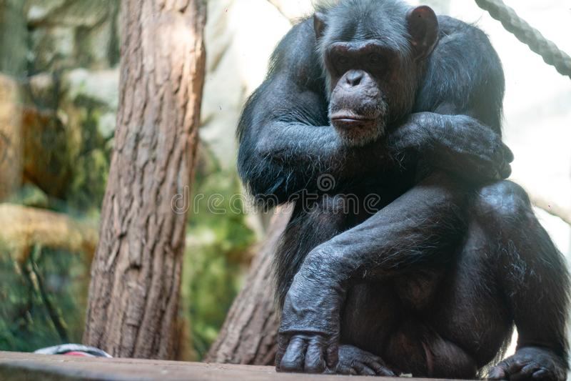 Monkey at the Warsaw Zoo stock photos