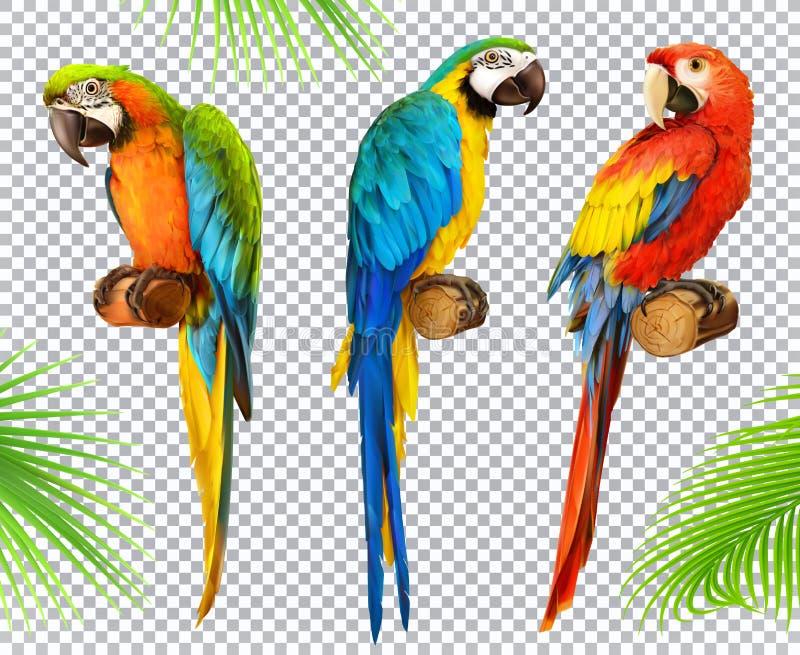 Munkhättapapegoja macaw symbolsuppsättning för vektor 3d royaltyfri illustrationer