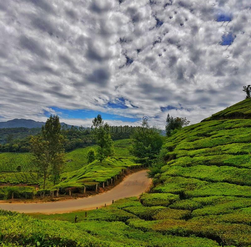 munnar茶园喀拉拉垂直的取向高力学范围风景  库存图片