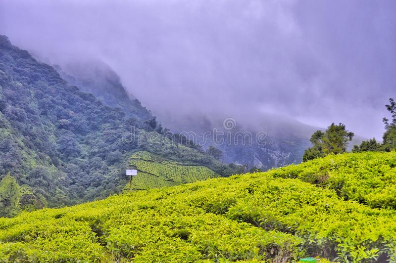 Munnar Κεράλα στοκ φωτογραφίες με δικαίωμα ελεύθερης χρήσης