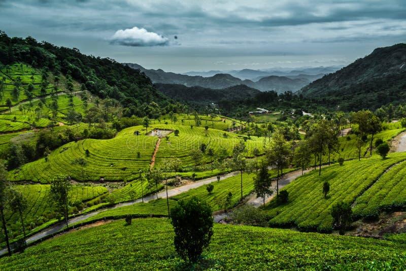 Munnar herbacianej plantaci kannan devan wzgórza obraz royalty free